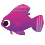 FL Fish
